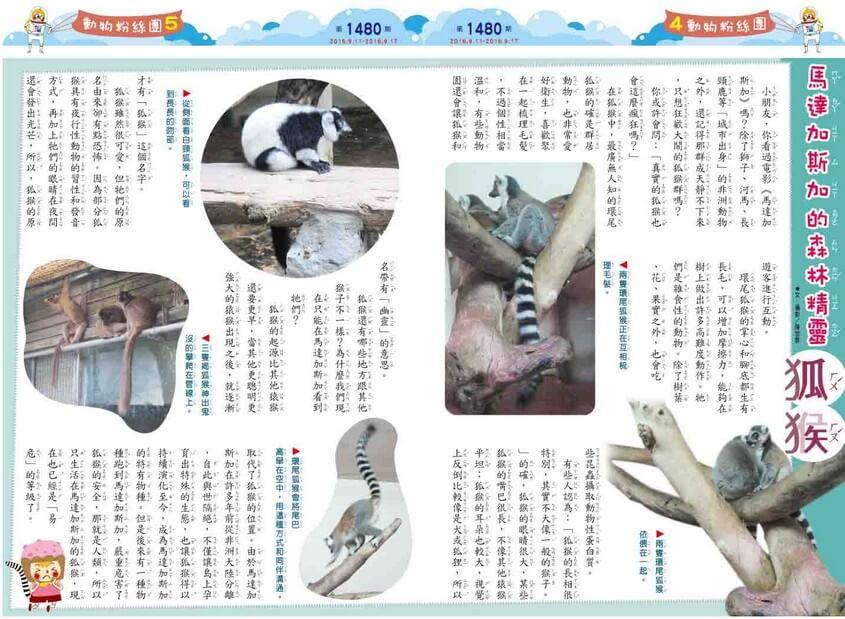 馬達加斯加的森林精靈  狐猴 全國兒童週刊1480期出刊囉!