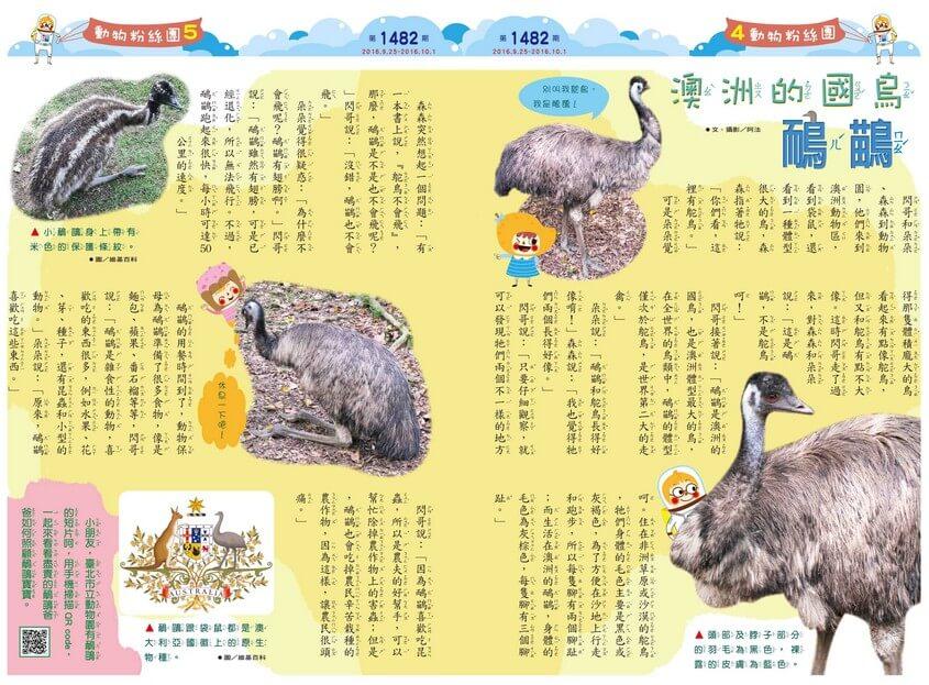 澳洲的國鳥 鴯鶓 澳洲動物澳洲國徽鴕鳥
