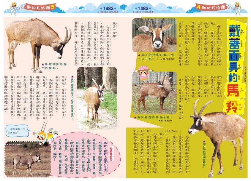 戴著面具的馬羚偶蹄目牛科非洲動物  全國兒童週刊1483期出刊囉!全國兒童週刊1483期出刊囉!