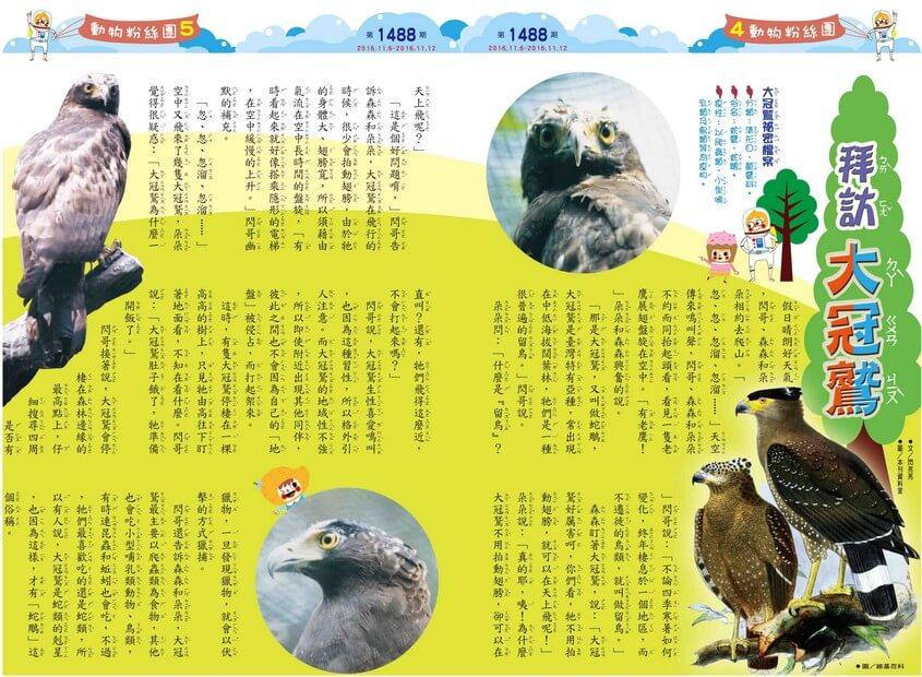 動物粉絲團  拜訪大冠鷲