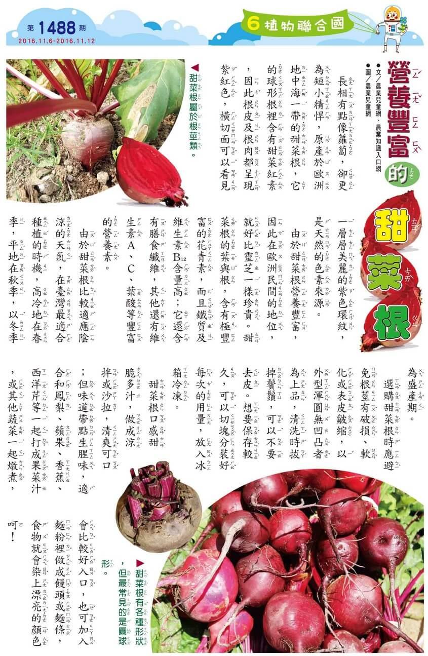 植物聯合國 營養豐富的甜菜根 全國兒童週刊1488期出刊囉!