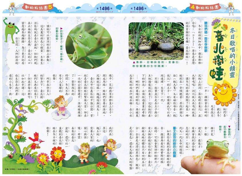 冬日歌唱的小精靈 臺北樹蛙